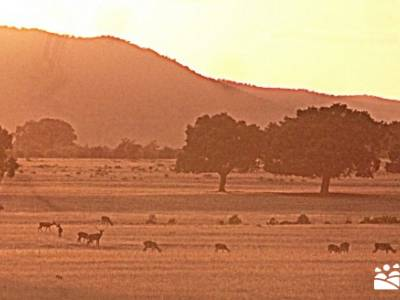 Berrea del Ciervo en Cabañeros y Montes de Toledo en 4x4;viajes julio viajes de trekking